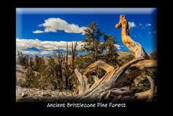 Bristlecone_Pines_DPP_4889_PC_Front