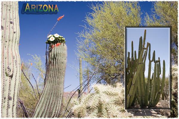 44_ArizonaCactusPC