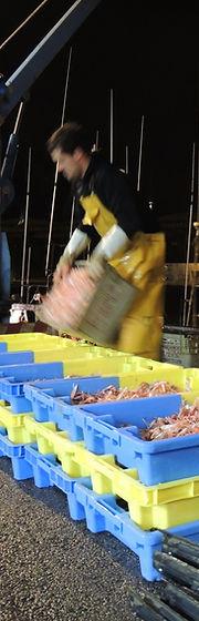 Démarquement poisson | Blue Fish France