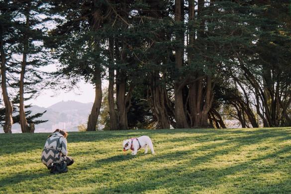Alta-Plaza-Park-San-francisco-Real-Estat