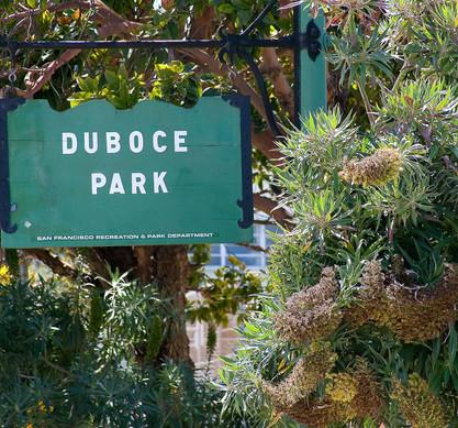 5j-Duboce-Triangle-Duboce-Park1-1024x957