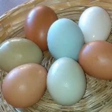 Eggs_01_edited.jpg