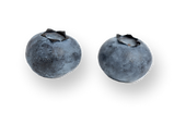 two-blueberries-isolated-on-a-white-surface 2.png