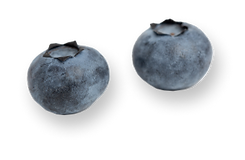 two-blueberries-isolated-on-a-white-surface 1.png