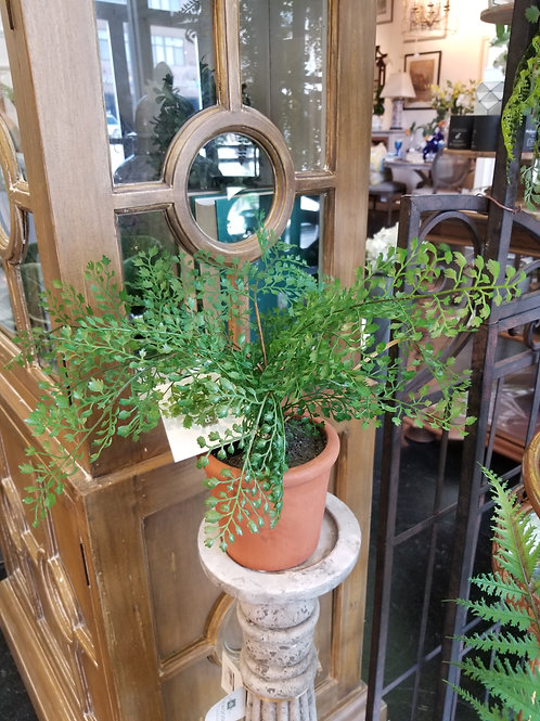 """16"""" Potted Fern in Clay Pot"""