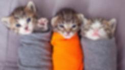 kittens papoosed.jpg