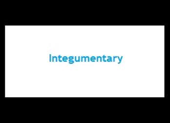 Primer - Integumentary