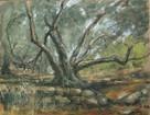 Paxos Olive