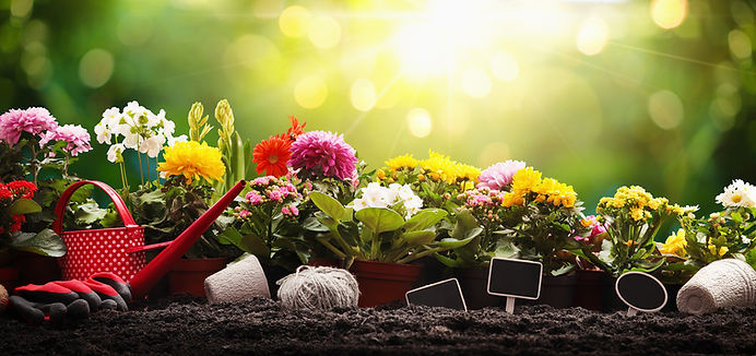 pancho jardines.jpg
