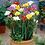 """Thumbnail: PLANTA ORNAMENTAL FREESIA EN MACETA 5"""" freesia x hybrida"""