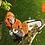 "Thumbnail: MOTOSIERRA TELESCOPICA STIHL HT103 12"", 1.4 HP, 31.4cc"