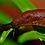 Thumbnail: SNAIL STOP, BY ORTHO, CARACOLICIDA PARA EXTERIORES LISTO PARA APLICAR, 1 KG