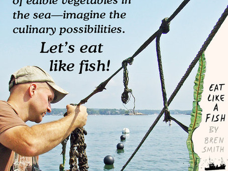 """Pesca """"verde"""" en el oceano"""
