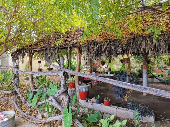 Jardín en Bacanora, Sonora