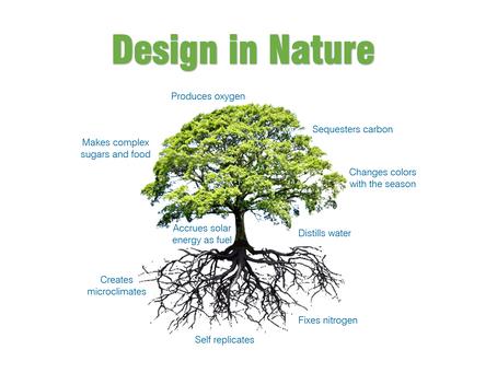 Cradle to Cradle® Design