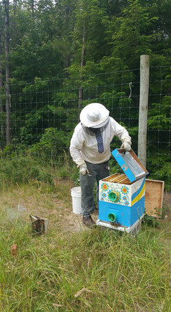 Each hive is uniquely painted.