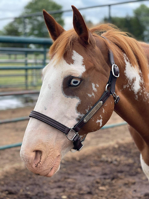 """MareFlare 1"""" Deluxe Leather Halter"""