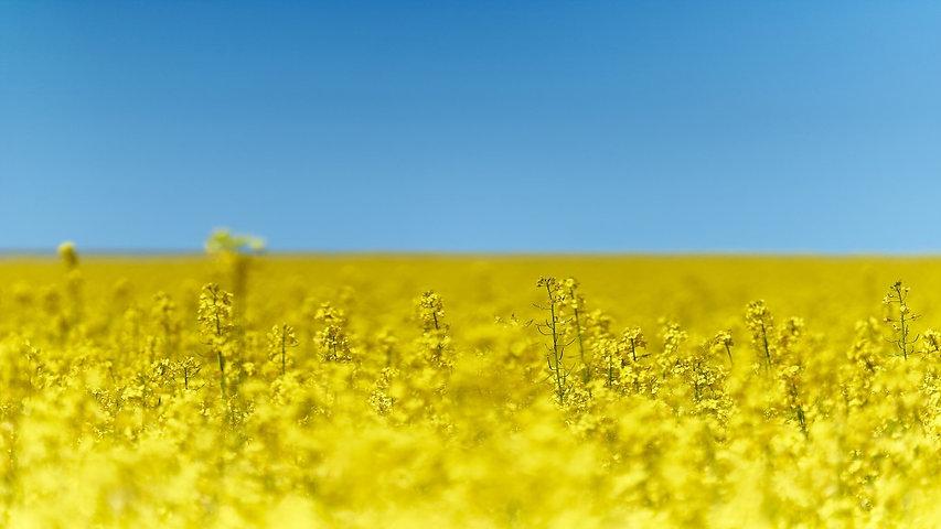 Украина-1024x576-MM-90.jpg