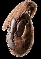 E-Shop di Cioccolato all'olio extravergine di oliva e migliore cacao sudamericano