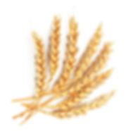 La pasta di semola di grano duro è ottenuta esclusivamente con grano duro coltivato nei nostri campi. L'essiccazione avviene a basse temperature ed in tempi molto lunghi  al fine di mantenere nella pasta gusto e principi nutritivi ed organolettici presenti nel grano.