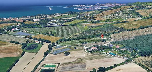 Olio extra vergine d'oliva marchigiano di alta qualità, verdure e ortaggi, agriturismo con piscina e ristorante, vendita online, vendita a km 0