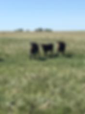 Enjoying the summer pasture