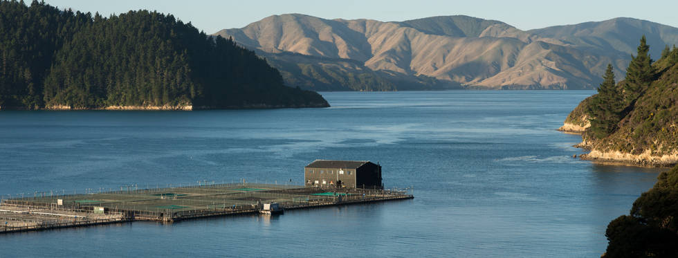 NZ King Salmon Farm
