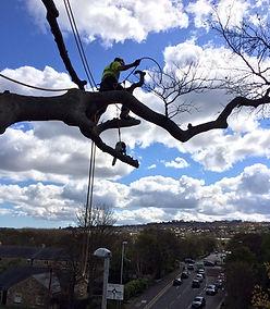 Professional Tree Surgeons | Newcastle, Northumberland