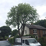 Contact Us | Green Eagle Tree Surgeons Newcastle Northumberland North East