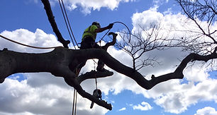 Green Eagle Tree Surgeons, Customer Testimonials