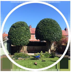 Professional Hedge Cutting | Newcastle Northumberland