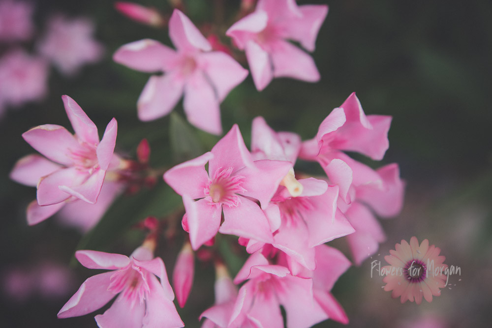 Perfectly pink by Swurv Photography