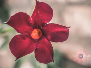 Five Red Petals