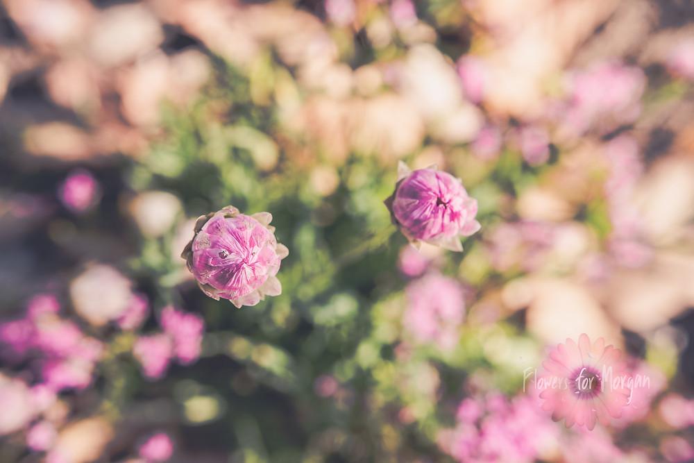 New Beginnings flowers for Morgan