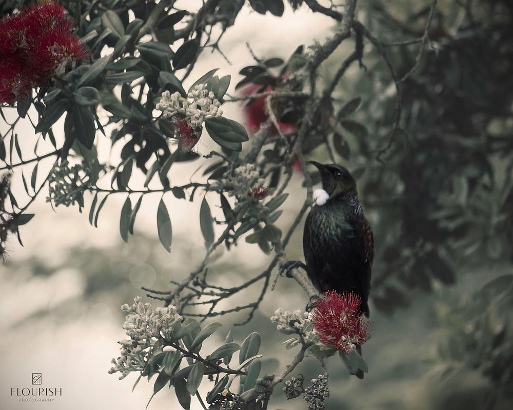 NZ Christmas tree in bloom - Flowers for Morgan