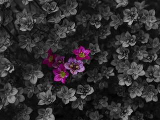 Vreni Flowers