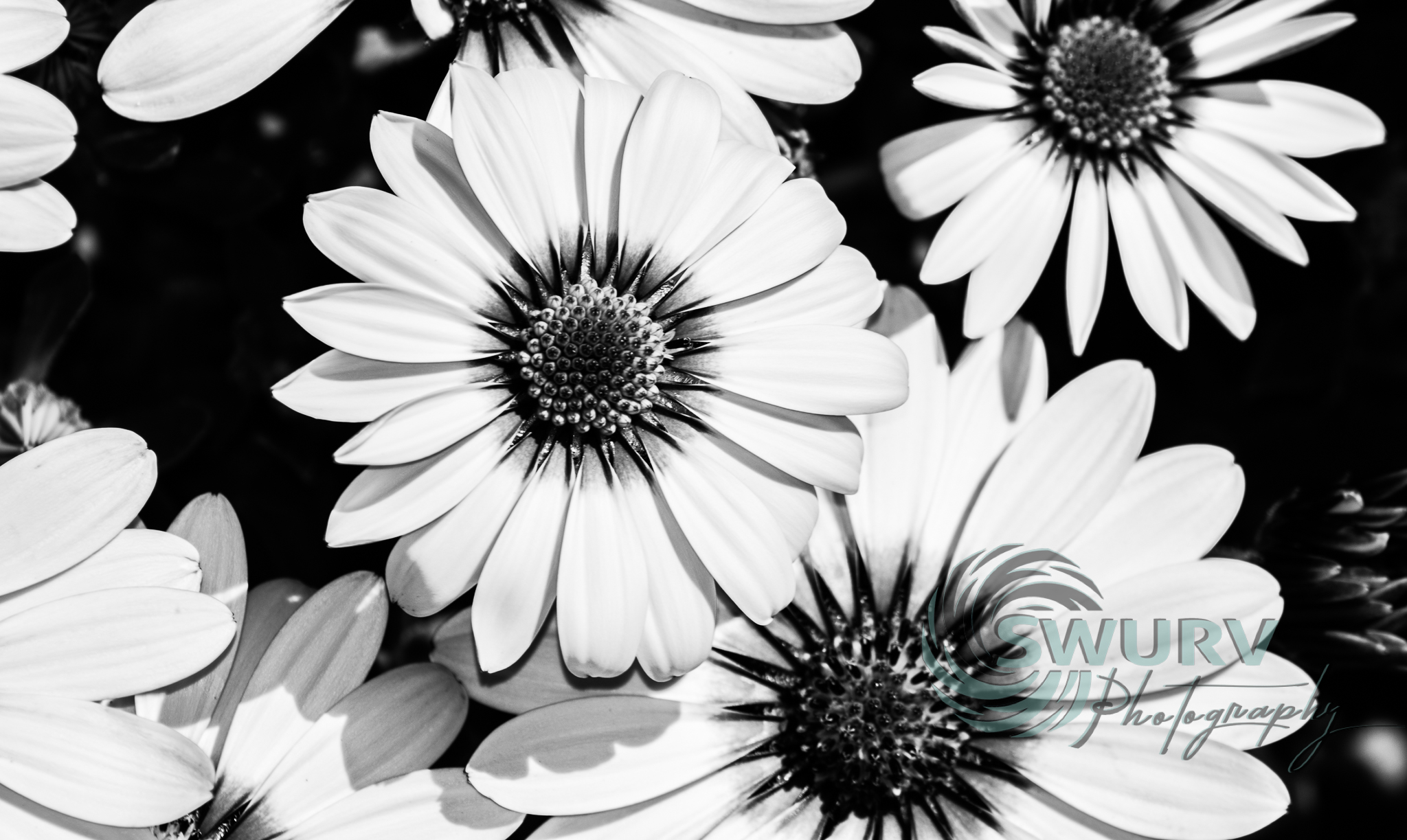 black and white flowers_swurvphotography