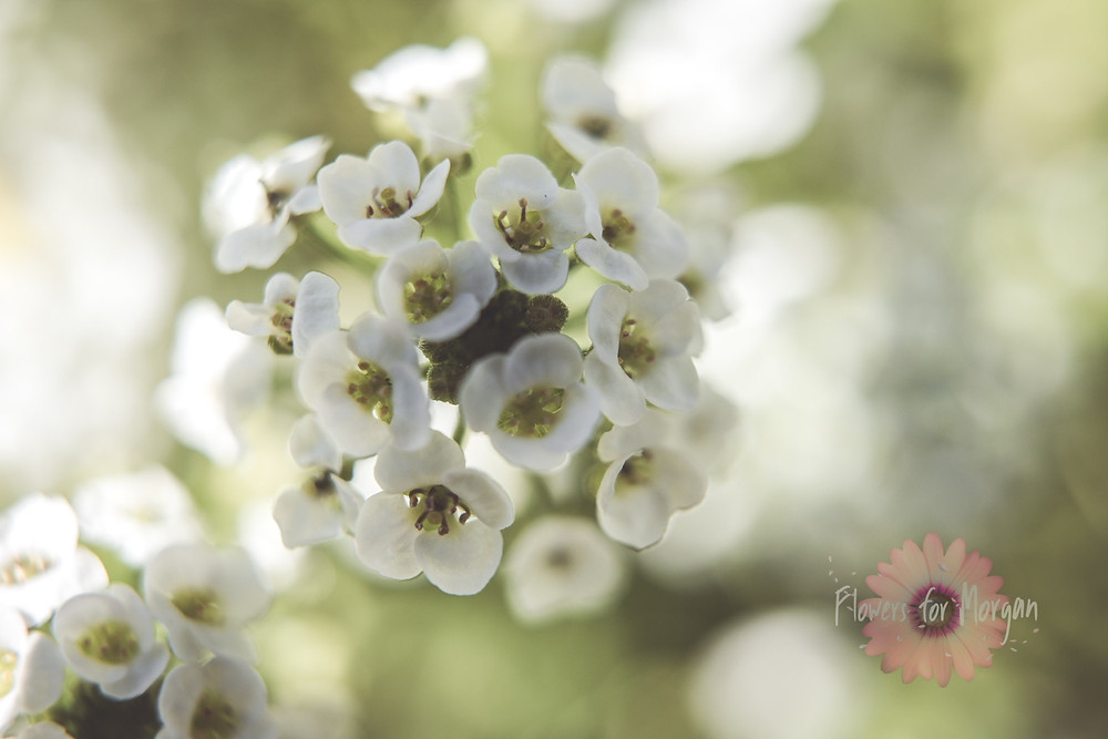 Jingle Bells - Flowers for Morgan by Swurv Photography
