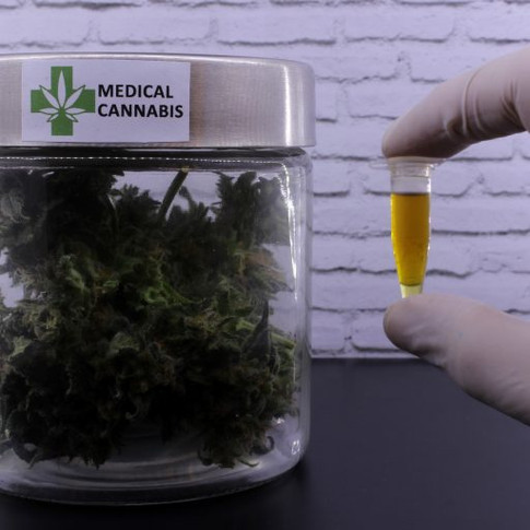 Comissão promove debate sobre cannabis medicinal e a perspectiva do mercado