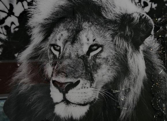 Ltd edition Lion (50)