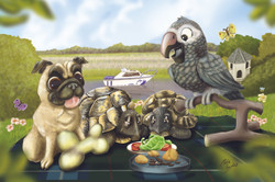 A pug, a parrot and two tortoises having a picnic!