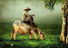 ox herder.jpg