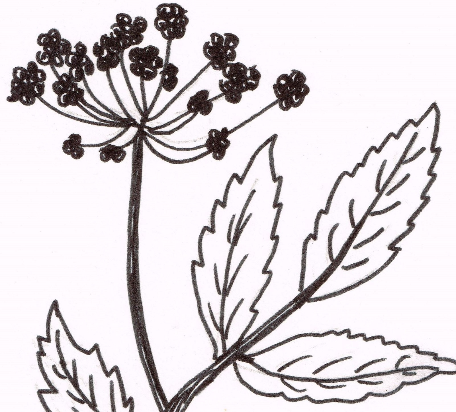 Aromatherapy Massage - Angelica Blend