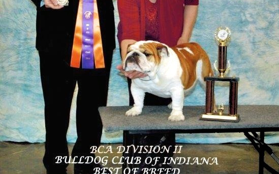 Boom was awarded Best of Breed at the Bulldog Club of Indiana Specialty by breeder Judge John Lancaster defeating many nice specials.   We were so excited with our first BISS.
