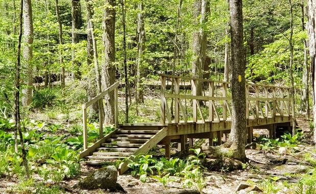 Whetten Woods Preserve