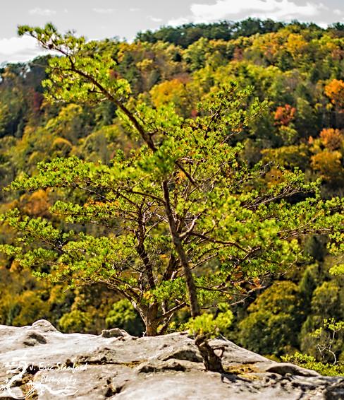 Bandy Creek-0239.jpg