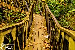 Bandy Creek-0192.jpg