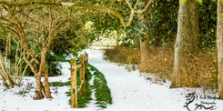 Winter Snow-10.jpg