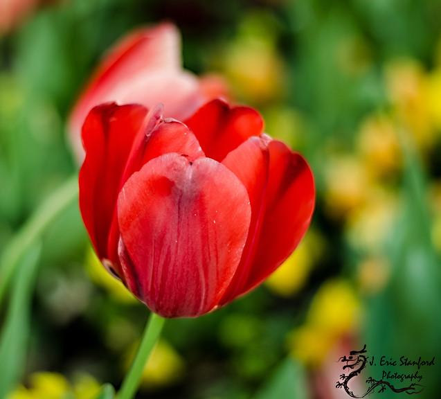 Spring-0088-4.jpg