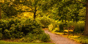 A Peacful Walk.jpg